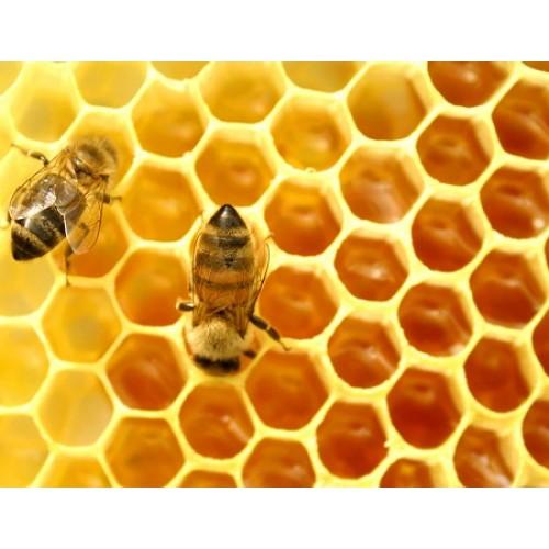 Mua mật ong nguyên chất ở đâu tốt nhất